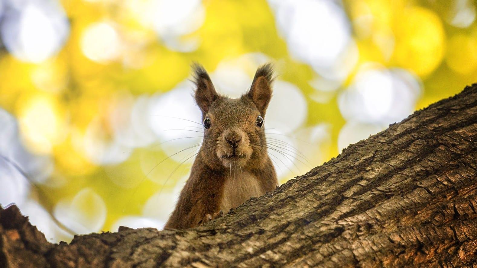 Budapesti őszi fotózás közben mókusokkal is találkozhatsz a Margitszigeten
